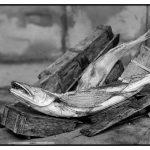 Imago-luciens aux 8èmes Rencontres photographiques de La Ravoire